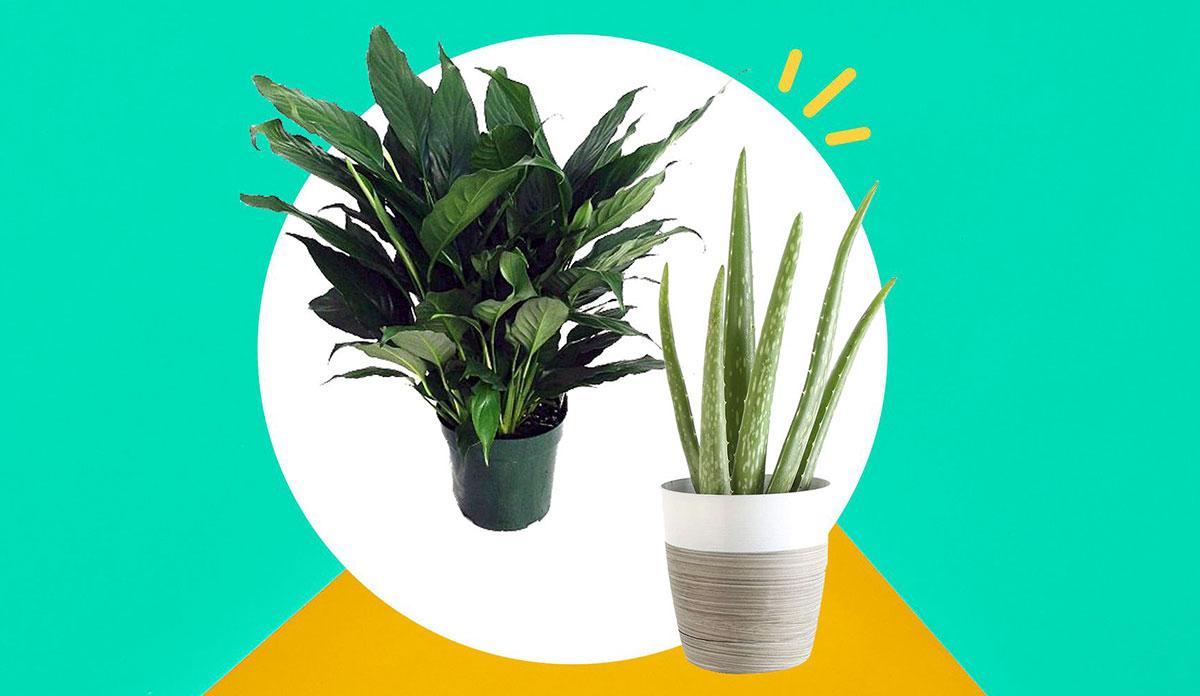 Plante, cum puteți profita mai mult de micile pete de culoare din casă